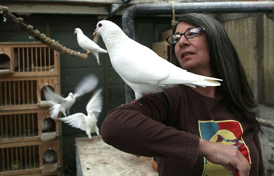Elizabeth Young, founding director of MickaCoo Pigeon and Dove Rescue, nursing king pigeons back to health in her aviary at home in San Francisco, California, on Friday,  December 14, 2012. Photo: Liz Hafalia, The Chronicle