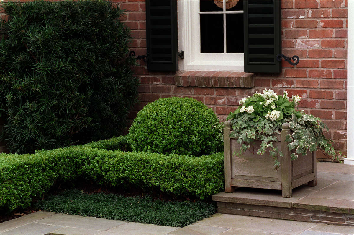 Evergreen boxwood provide year-round structure in this orderly garden.