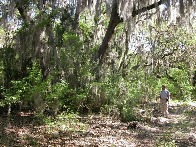 The Mossy Grove is a pleasant surprise along the Joe Johnson Route, a hiking trail at Government Canyon State Natural Area. The park  lists 10 activities for the First Day Hikes program, including an 8 a.m. overlook hike (seven miles). Photo: San Antonio Express-News