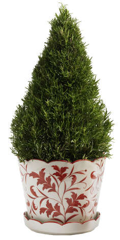 Rosemary Christmas trees are beautiful, fragrant and can be used in cooking. / THE WASHINGTON POST