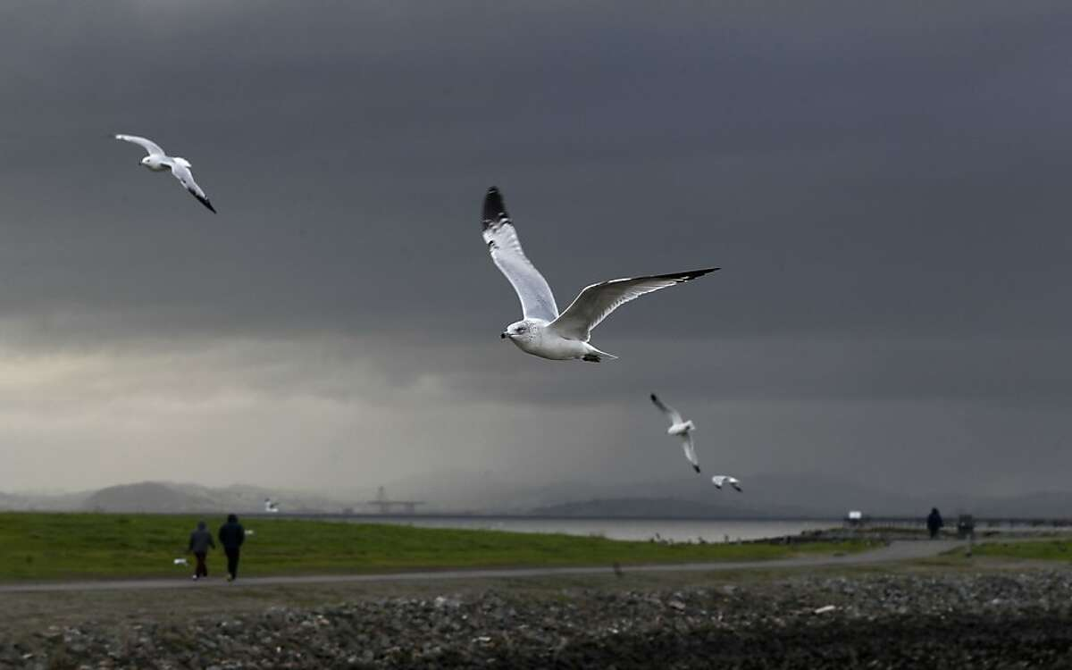 Sea Gulls against the dark skies at the San Leandro Marina as visitors take walks before the next rain arrives, while a series of storms are lined up off the coast on Friday Dec. 21,2012.