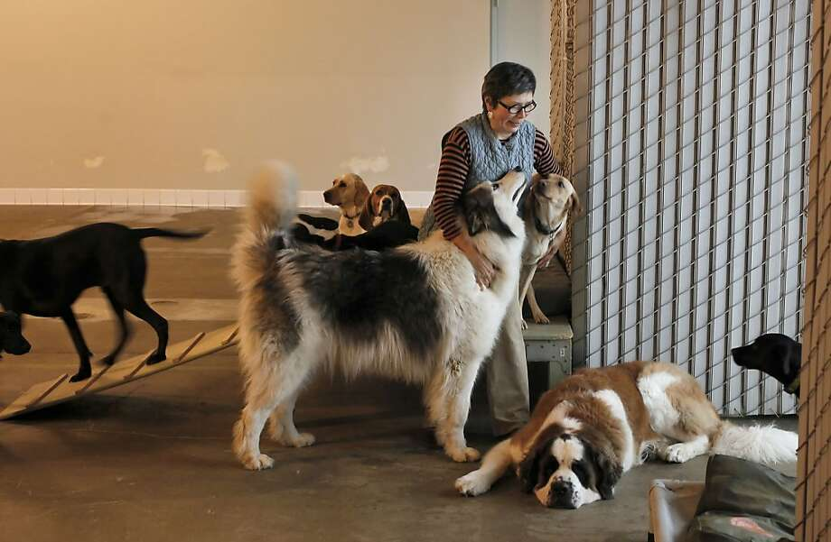 With a power career in her past, Dog Pile Dogs founder Anna Gil now gets nuzzles and wags in her day job. Photo: Michael Macor, The Chronicle