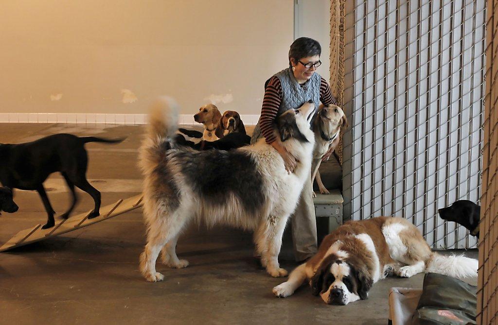Dog pile 2005
