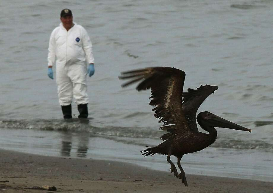 BP and its partners still face trial over environmental damage from the 2010 spill, which harmed wildlife like this pelican. Photo: Win McNamee, Getty