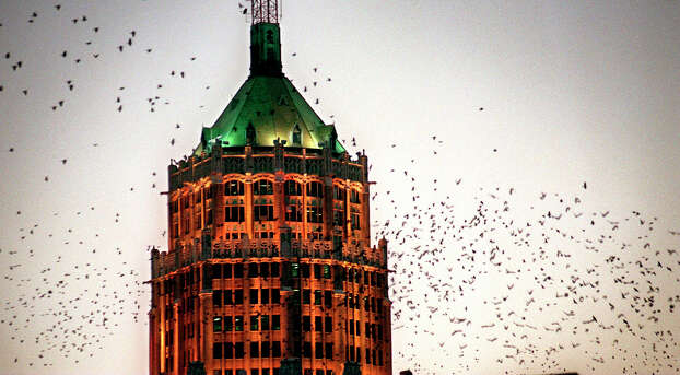 Grackles flock around the illuminated Tower Life Building at dusk in San Antonio in February 1998. Photo: Bob Owen, San Antonio Express-News / SAN ANTONIO EXPRESS-NEWS