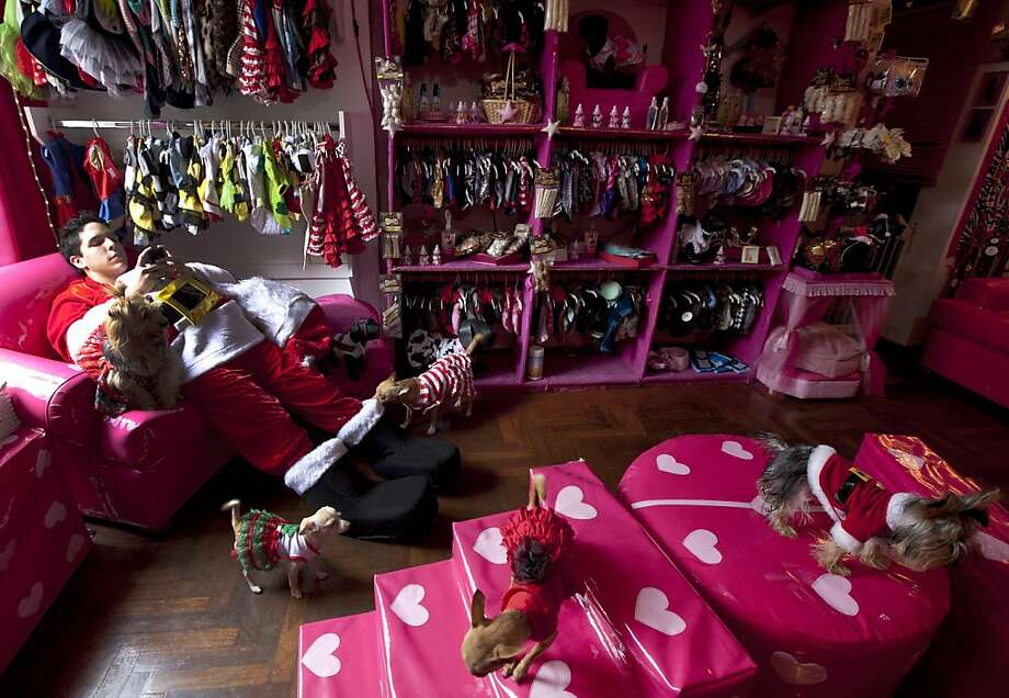 A man dressed in a Santa Claus costume chats on his cell phone as he works at a dog boutique where customer's dogs wearing Christmas costumes walk around in Lima, Peru, Saturday, Dec. 22, 2012. The pet boutique hired him for the Christmas holidays. (AP Photo/Martin Mejia) Photo: Martin Mejia, Associated Press