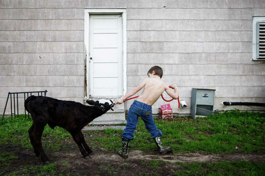 """William Frazier, 7, works to train his three-month old calf named Sparkles for the upcoming Bay City Rodeo, Thursday, Jan. 26, 2012, in Bay City.  Frazier's father works at the local nuclear power facility.  """"I don't think it's fair we're being punished by some law affecting Houston,"""" said Frazier's mother Taina.  """"We all need jobs, not just here in Bay City but everywhere in Texas.  The nuclear facility doesn't create much pollution.""""  Texas 60 slices north-south through Matagorda County, offering alternate glimpses of rural charm and a hollowed economy. Through a windshield, it would be difficult to imagine this place ever being a polluting menace, with its rice farms and shrimp boats, bronzed beaches and shuttered storefronts. Federal environmental regulators, however, see the sparsely populated county as a significant contributor to the dirty halo over Houston, some 80 miles away. The Environmental Protection Agency is seeking to add Matagorda County to the list of Texas' smog violators because Gulf breezes that blow through the area send air pollution toward the sprawling metropolis. Local leaders are pushing back, saying the dubious distinction would lead to stricter regulation of industry at a time when unemployment is at 11 percent in the county. Photo: Michael Paulsen, Houston Chronicle / © 2011 Houston Chronicle"""