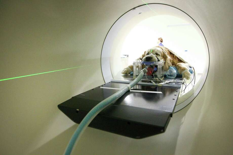 Bo the dog is anesthetized for his radiation treatment in the Tomo Therapy machine at Texas A&M's Veterinary Medicine College Thursday, April 12, 2012, in College Station. Texas A&M's Veterinary Medicine College is one of only two places in the country that offers tomo therapy - a cutting edge cancer treatment for animals. Photo: Karen Warren, Houston Chronicle / © 2012  Houston Chronicle