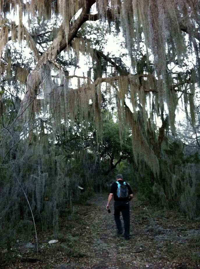 Spanish moss is draped over live oaks and cedar elms in a spot on the overlook hike at Government Canyon State Natural area in northwest San Antonio. The park plans 10 activities for the First Day Hikes program Jan. 1 Photo: San Antonio Express-News