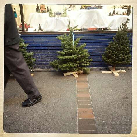 Trees for sale at Cole Fox Hardware on Thursday Dec. 20, 2012 in San Francisco, Calif. Photo: Mike Kepka, The Chronicle