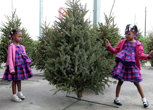 Four-year-old Lauren Steemer and her five-year-old sister Lacie Steemer look over the Christmas tree their family picked out to purchase at Houston Garden Center at 11833 Southwest Freeway Sunday, Dec. 23, 2012, in Houston. Photo: James Nielsen, Chronicle / © Houston Chronicle 2012
