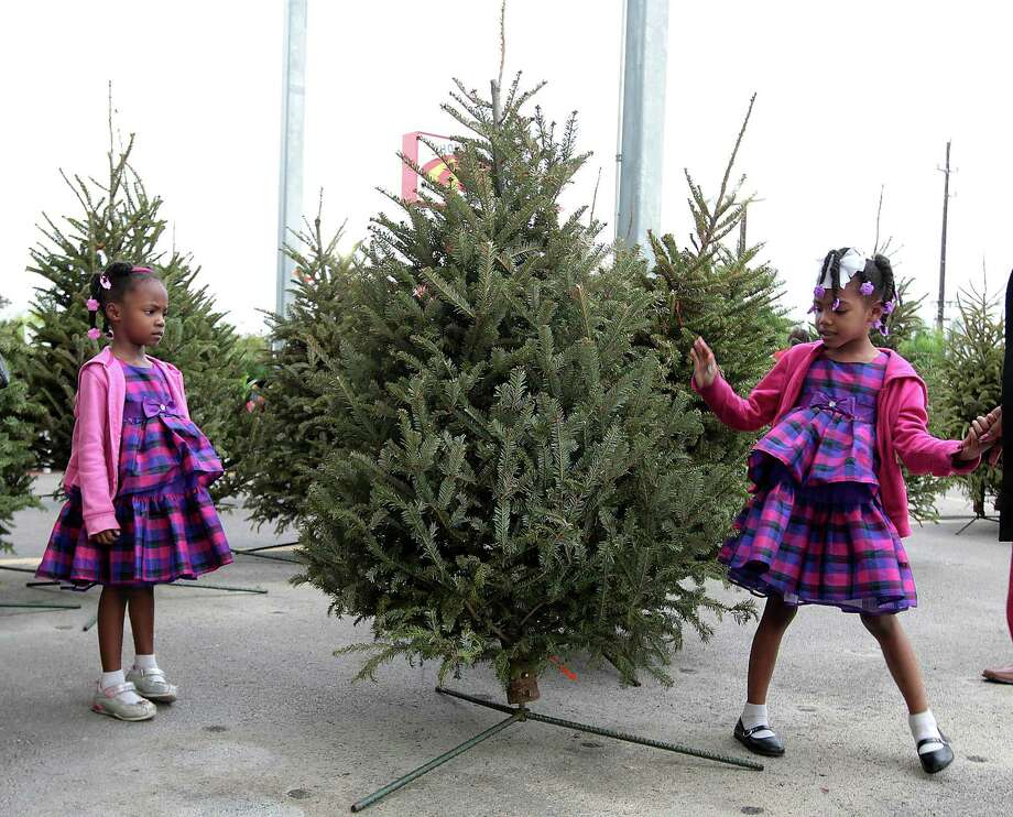 Four-year-old Lauren Steemer and her 5-year-old sister Lacie look over the tree their family picked out to purchase from a nursery on Sunday. Photo: James Nielsen, Staff / © Houston Chronicle 2012