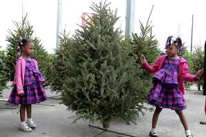 Four-year-old Lauren Steemer and her 5-year-old sister Lacie look over the tree their family picked out to purchase from a nursery on Sunday.