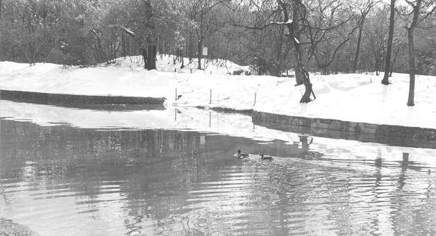 Ducks swim in a San Antonio body of water after more than a foot of snow blanketed the city in January 1985. Photo: San Antonio Express-News File Photo