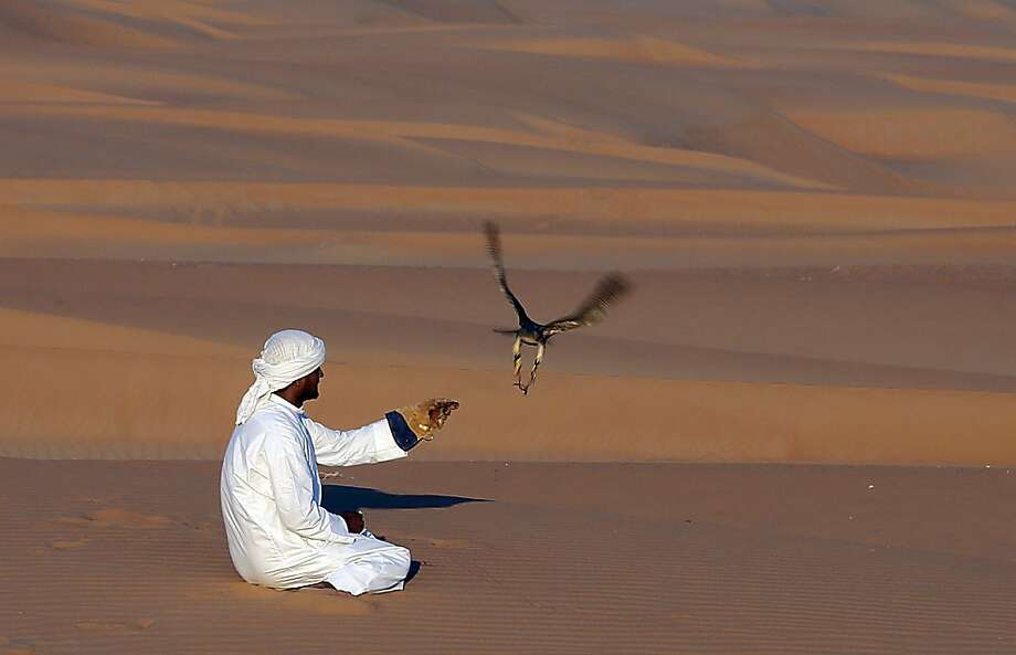 An Emirati man holds his falcon at the Liwa desert, 220 kms west of Abu Dhabi, on the sidelines of the Mazayin Dhafra Camel Festival on December 23, 2012. The festival, which attracts participants from around the Gulf region, includes a camel beauty contest, a display of UAE handcrafts and other activities aimed at promoting the country's folklore. AFP PHOTO/KARIM SAHIBKARIM SAHIB/AFP/Getty Images Photo: Karim Sahib, AFP/Getty Images