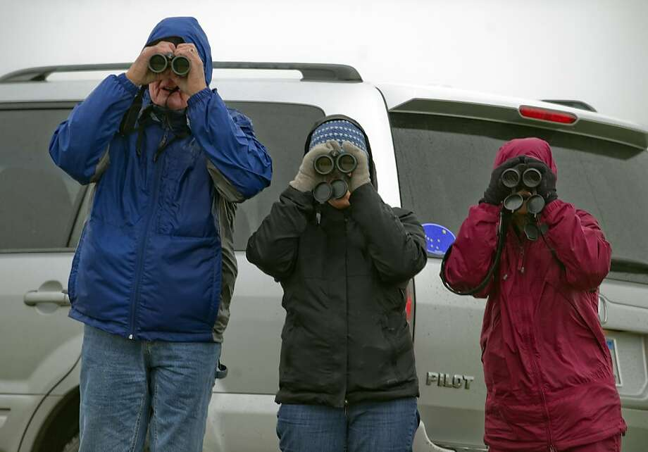 Tim Fitzer, left, Margeret Martin, center, and Jane Talor, right, look for waterfowl in Yolo County at the annual  Christmas bird count by the Sacramento Audubon Society, Sunday, Dec.  23, 2012 in Woodland, Calif. The group braved high winds and rain because the count doesn't cancel because of weather. (AP Photo/The Sacramento Bee, Renee C. Byer)  Photo: Renee C. Byer, Associated Press