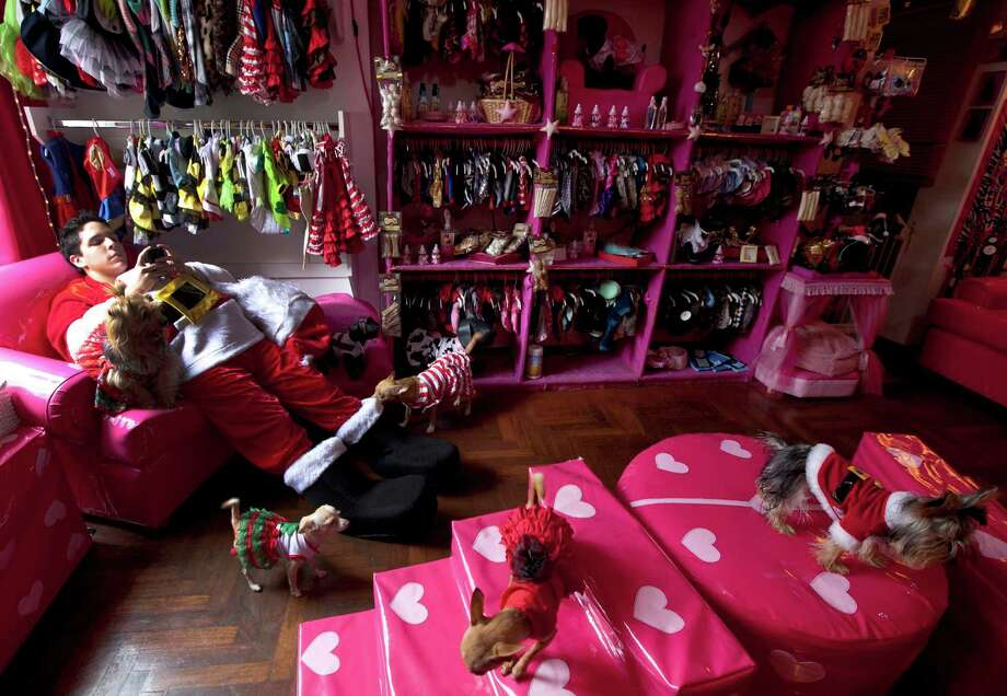 A man dressed in a Santa Claus costume chats on his cell phone as he works at a dog boutique where customer's dogs wearing Christmas costumes walk around in Lima, Peru, Saturday, Dec. 22, 2012. The pet boutique hired him for the Christmas holidays. Photo: Martin Mejia, AP / AP