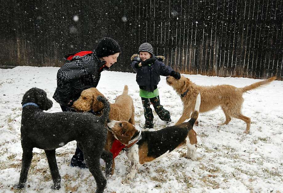 Walker Bowerman, 10, and Hughes Bowerman, 6, play with the family dogs  in Arlington, Texas. Snow canceled flights at the Dallas-Fort Worth airport. Photo: David Woo, Associated Press