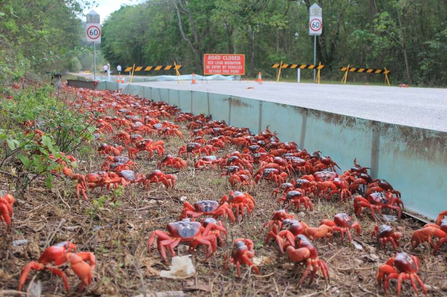 Caution: Crab crossing. (Christmas Island Tourism Association)