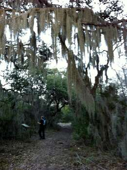The Mossy Grove is a picturesque surprise on a trail at Government Canyon State Natural Area. Photo: San Antonio Express-News