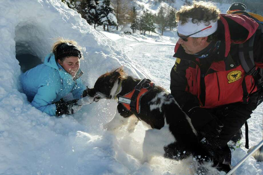 This avalanche dog, a 18-month-old Labrador, frees a person buried in the snow during a training session in the French Alps. France has 140 avalanche rescue teams with dogs. Photo: JEAN-PIERRE CLATOT, AFP/Getty Images / AFP