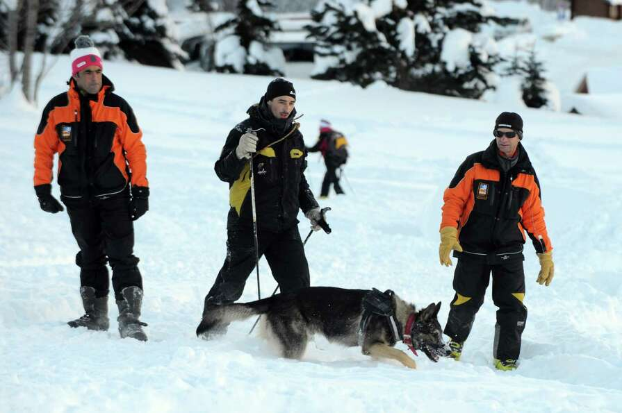 It isn't all play. This avalanche dog searches for people buried in the snow during a training sessi