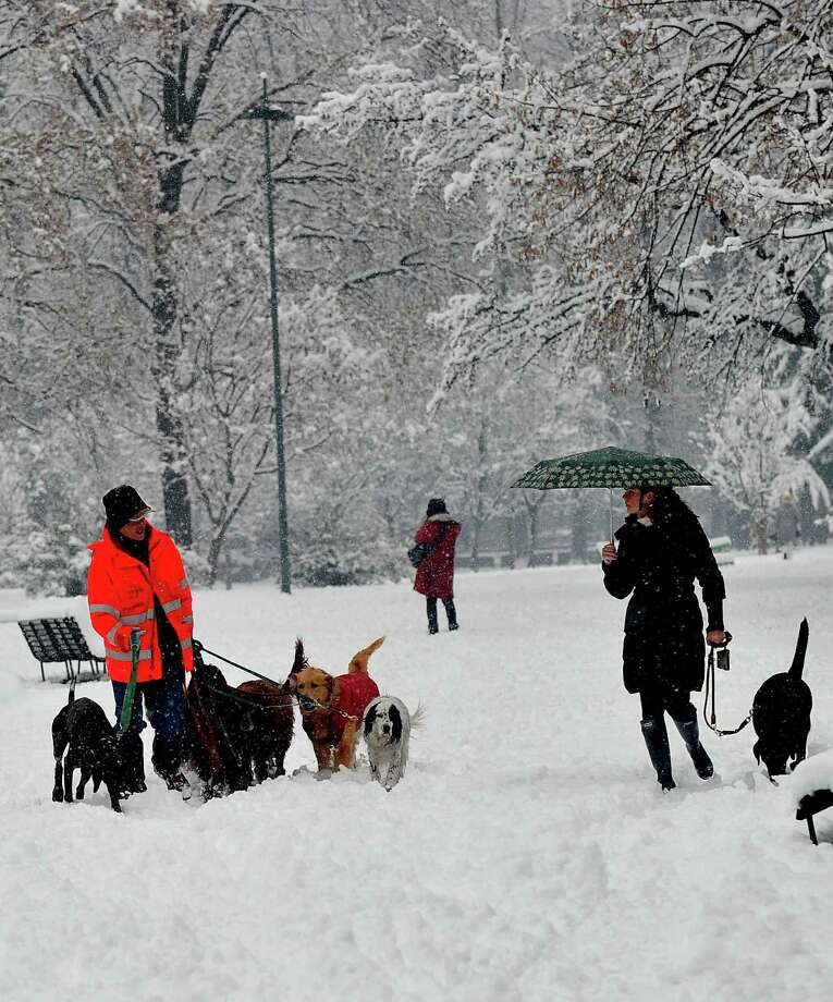 In what's practically a postcard-worthy scene, people and dogs mingle in a snowy park on Dec. 14 in Milan. Photo: TIZIANA FABI, AFP/Getty Images / AFP