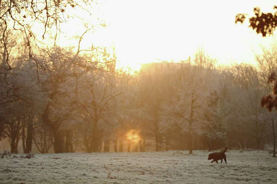 This pup is the first to greet the early morning frost on Dec. 12 in Regents Park in London. Photo: Dan Kitwood, Getty Images / 2012 Getty Images