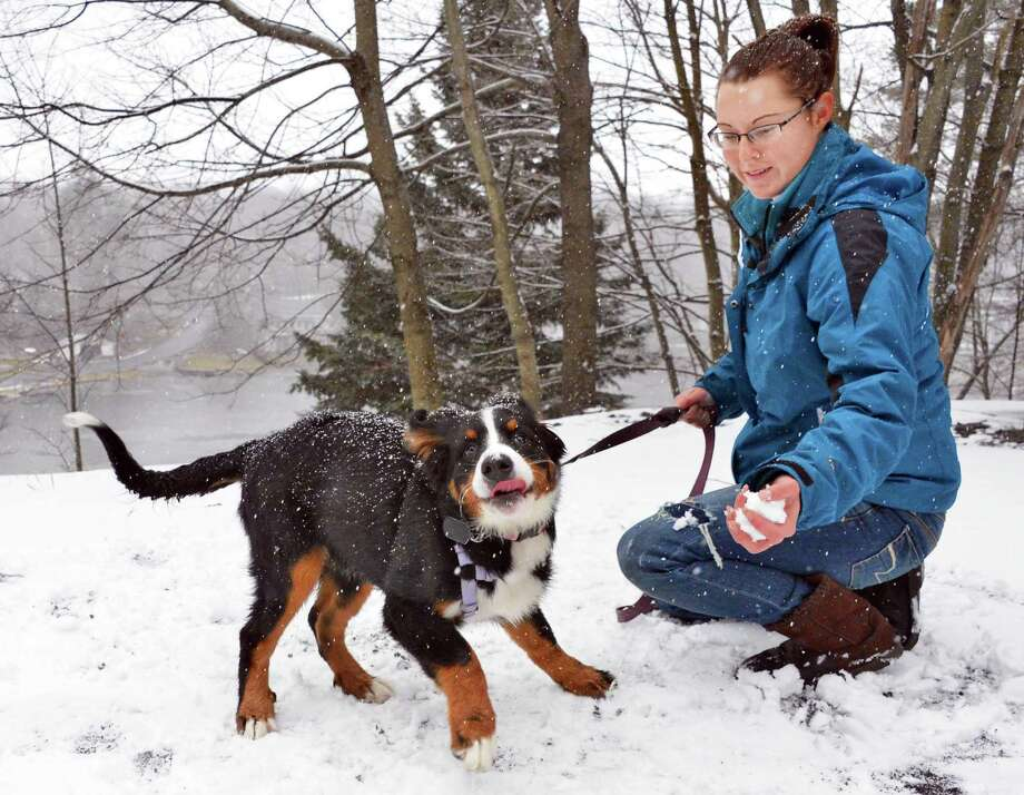 Sable, an 18-week-old Bernese mountain dog, gets her first look at snow at Onderdonk Lake in Berne, N.Y., on Nov. 17. Photo: John Carl D'Annibale, Albany Times Union / ONLINE_YES
