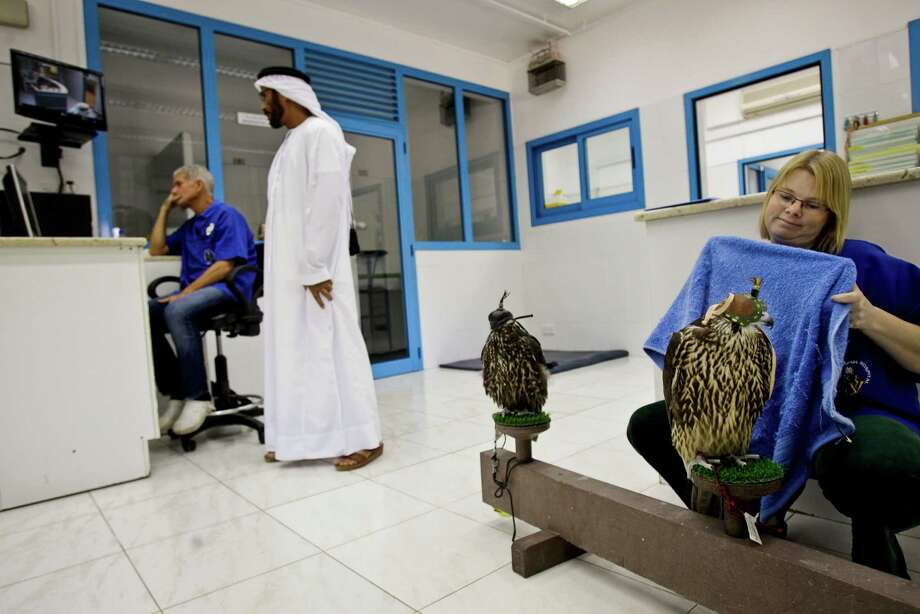 In this Thursday, Oct. 18, 2012 photo, Sarah Gough, a veterinary nurse, right, prepares to wrap a falcon in a towel during a medical procedure at a Falcon hospital in Dubai, United Arab Emirates. The Dubai Falcon Hospital was established by Sheik Hamdan bin Rashid al Maktoum, the brother of the ruler of Dubai, in 1983 and and provides care to hunting and breading falcons of royal families in Gulf States and emergency treatments for all the falcons in the UAE. While the methods to develop top-quality hunting falcons date back to antiquity, its transition into a modern Middle Eastern passion has brought in microchip tagging and price tags that can run well over $10,000 for a prime bird. Photo: Kamran Jebreili, AP / AP