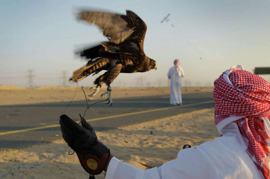 In this Wednesday, Nov. 14, 2012 photo, an Emirati falconer releases a falcon to chase a pigeon body pulled by a remote control model plane during a training session on the outskirts of Dubai, United Arab Emirates. While the methods to develop top-quality hunting falcons date back to antiquity, its transition into a modern Middle Eastern passion has brought in microchip tagging and price tags that can run well over $10,000 for a prime bird. Photo: Kamran Jebreili, AP / AP