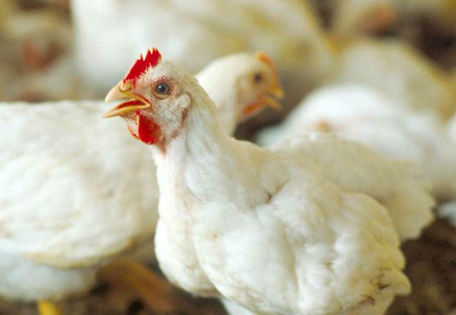 Send us your favorite poultry recipes. (Times Union)