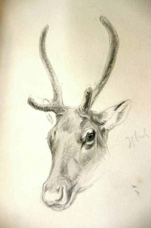 Among the illustrations in the journals of artists/naturalist Ernest Thompson Seton is this fine study of a young buck deer. His self-taught skills as a naturalist artist resulted in many illustrated animal story books for children. Photo: Anne W. Semmes