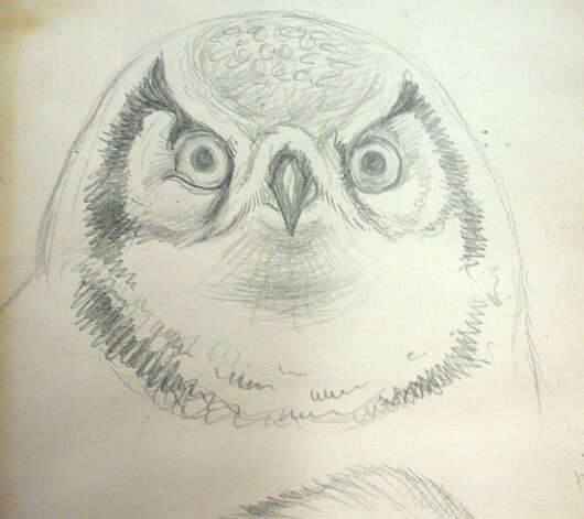 In his journals, Seton draws an owl . . . Photo: Anne W. Semmes