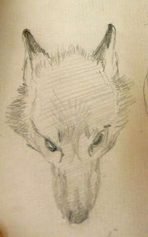 A study of a fox head Photo: Anne W. Semmes