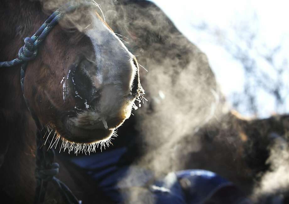 "Bits of ice hang from the mouth and nose of a horse after The Dakota Wokiksuye Memorial Ride had culminated at Reconcilation Park, Wednesday, Dec. 26, 2012, in Mankato, Minn. The annual ride commemorates the 38 + 2 Dakota warriors hanged following the Dakota War of 1862. The ""Dakota 38"" Memorial lists the names of all the Dakota warriors hanged in 1862. Photo: David Joles, Associated Press"