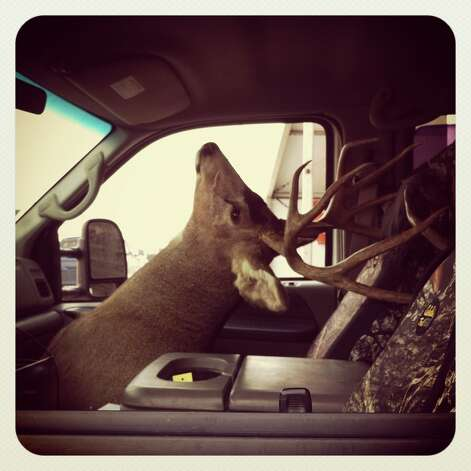 A deer head sits in a car at the San Antonio Stock Show and Rodeo. Photo taken with an iPhone 4 and processed with Instagram. Photo: San Antonio Express-News