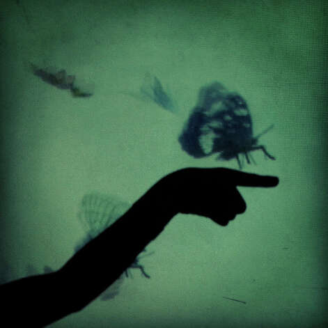 A child plays with the shadows and butterfly video display in The Sensory Village during Welcome Home, an event sponsored by the South Texas Veterans Health Care System, at Morgan's Wonderland in San Antonio on Saturday, April 14, 2012. This photograph was made with an iPhone 4 and processed with Instagram. Photo: San Antonio Express-News