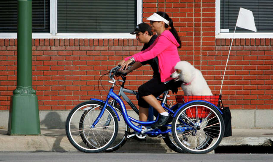 Gina Loera's seven-year-old poodle, Fifi, rides in the back of Loera's three-wheel bicycle Thursday Feb. 23, 2012 as Loera and her friend Jess Ramirez ride down Broadway towards downtown. Loera says when the weather permits she rides almost 5 days a week with Fifi who has been riding with Loera for about two years. Photo: William Luther / © 2012 SAN ANTONIO EXPRESS-NEWS