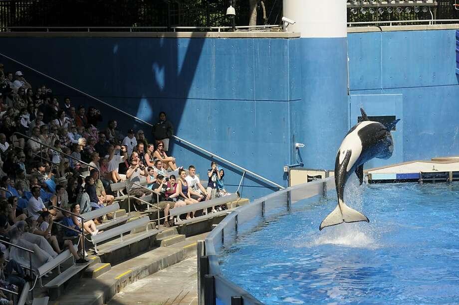 Blackstone Group's SeaWorld Entertainment filed for an initial public offering to raise $100 million. Photo: Phelan M. Ebenhack, Associated Press