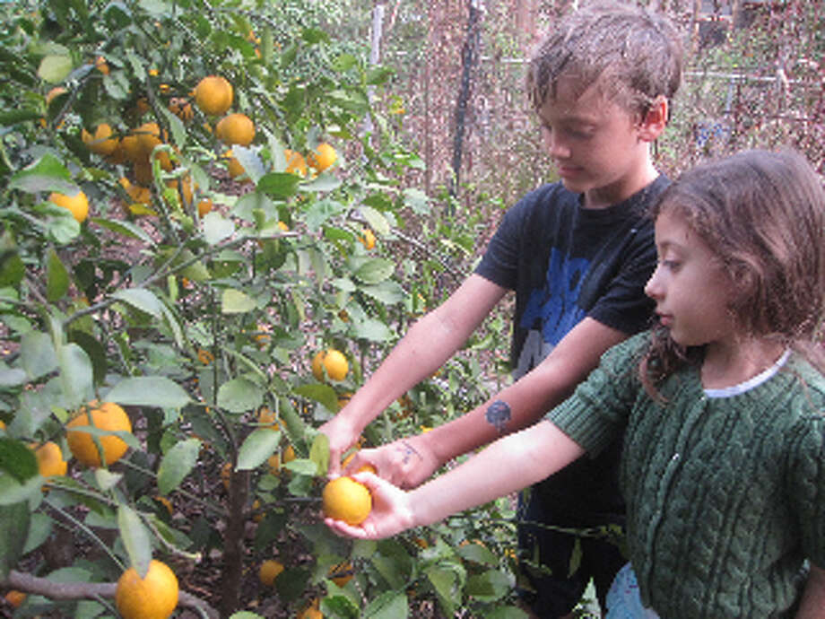 Children who have issues with new foods will taste fruit they have participated in nurturing.