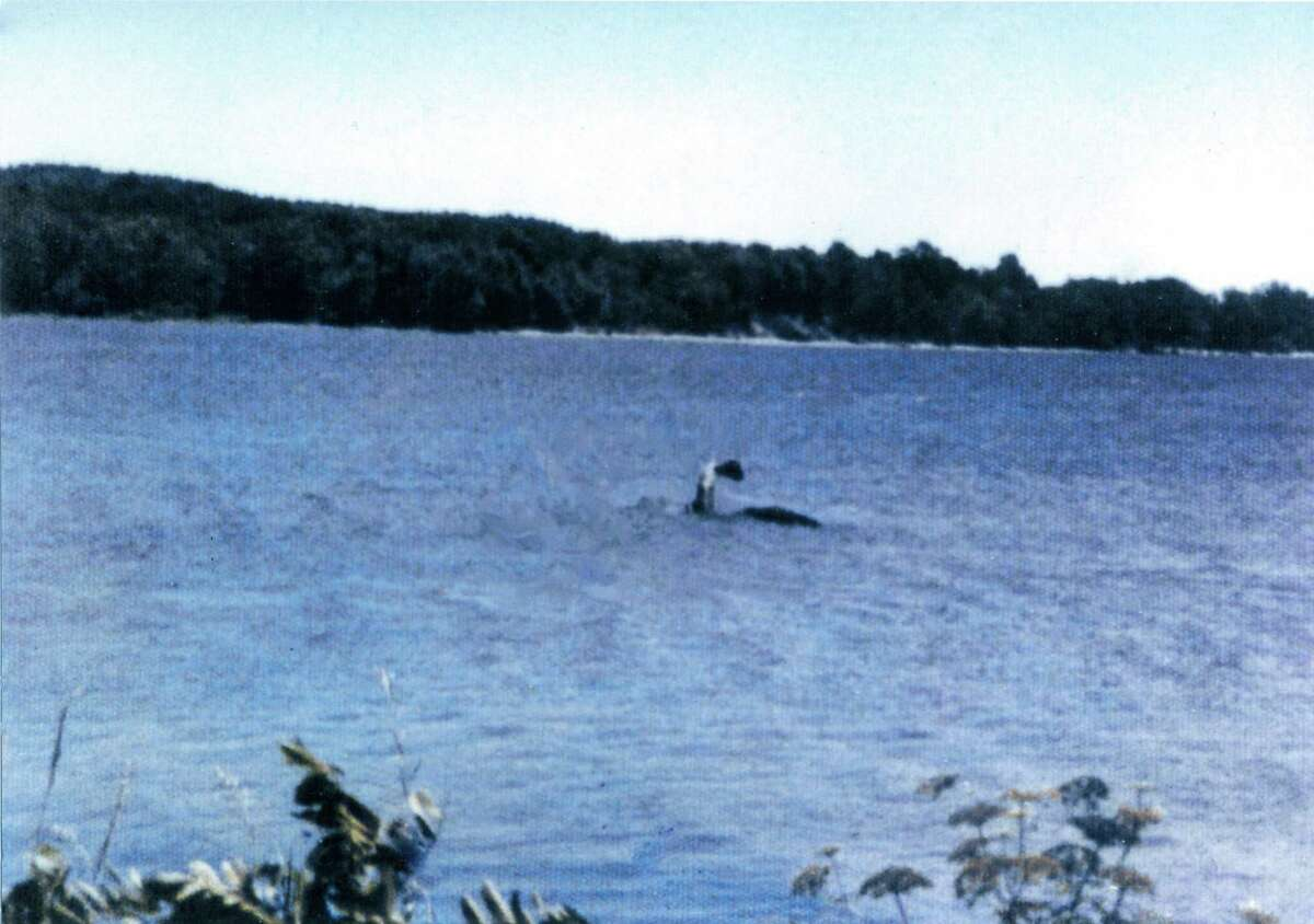 Photo courtesy SUNY Press Sandra Mansi's controversial photo reportedly taken in July, 1977, in Lake Champlain. Considered the most famous Champ image, but strongly discredited by Robert Bartholomew in his book.