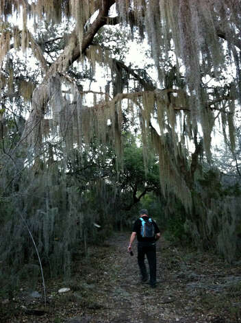 Spanish moss is draped over trees at the Mossy Grove at a popular spot on the trails of Government Canyon State Natural Area. (Terry Scott Bertling / San Antonio Express-News)