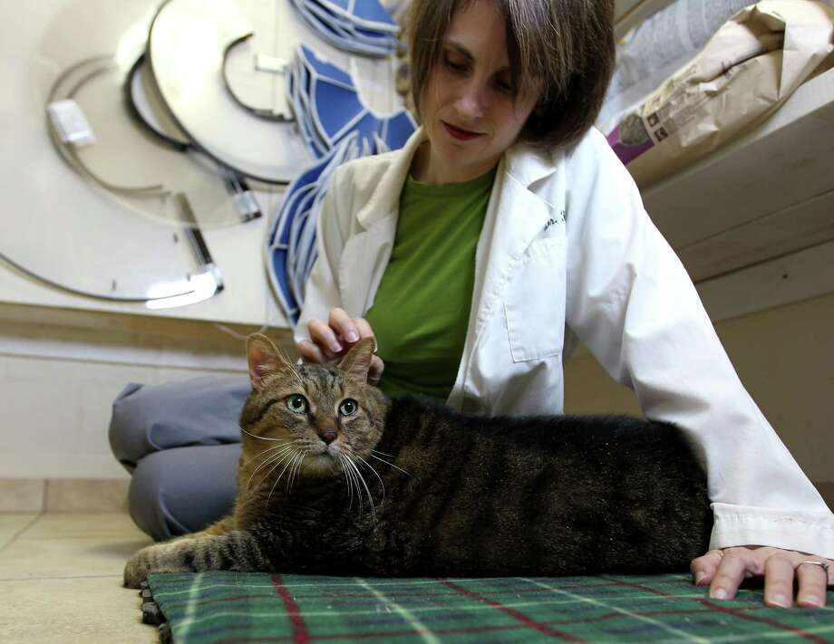 Dr. Jessica Reyna pets Tiny Tim at the Southside Place Animal Hospital last December. The cat who once weighed 35 pounds has a tumor in his leg. Veterinarians don't believe the cancer is due to Tiny Tim's obesity. Photo: Karen Warren, Staff / © 2012 Houston Chronicle