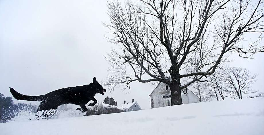 Luna, a black Lab mix, frolics in fresh snow in East Derry, New Hampshire, Thursday, Dec. 27, 2012. The southern N.H. area received about eight inches of snow from the winter storm. Photo: Charles Krupa, Associated Press
