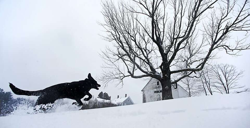 Luna, a black Lab mix, frolics in fresh snow in East Derry, New Hampshire, Thursday, Dec. 27, 2012.