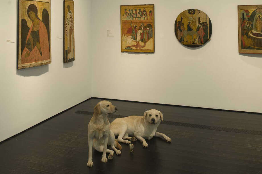 Installation view of Maurizio Cattelan's exhibition at the Menil Collection. Photo: Paul Hester / Douglas.Britt@chron.com