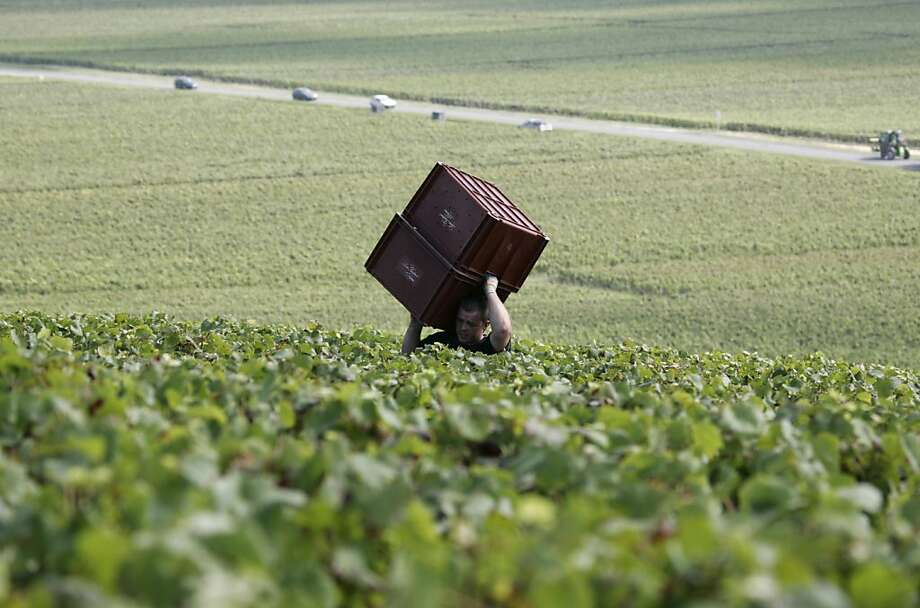 Above: Grapes are harvested near Epernay in France's Champagne region. Though the French are popping fewer Champagne corks, sales rose in other markets. Photo: Francois Mori, Associated Press