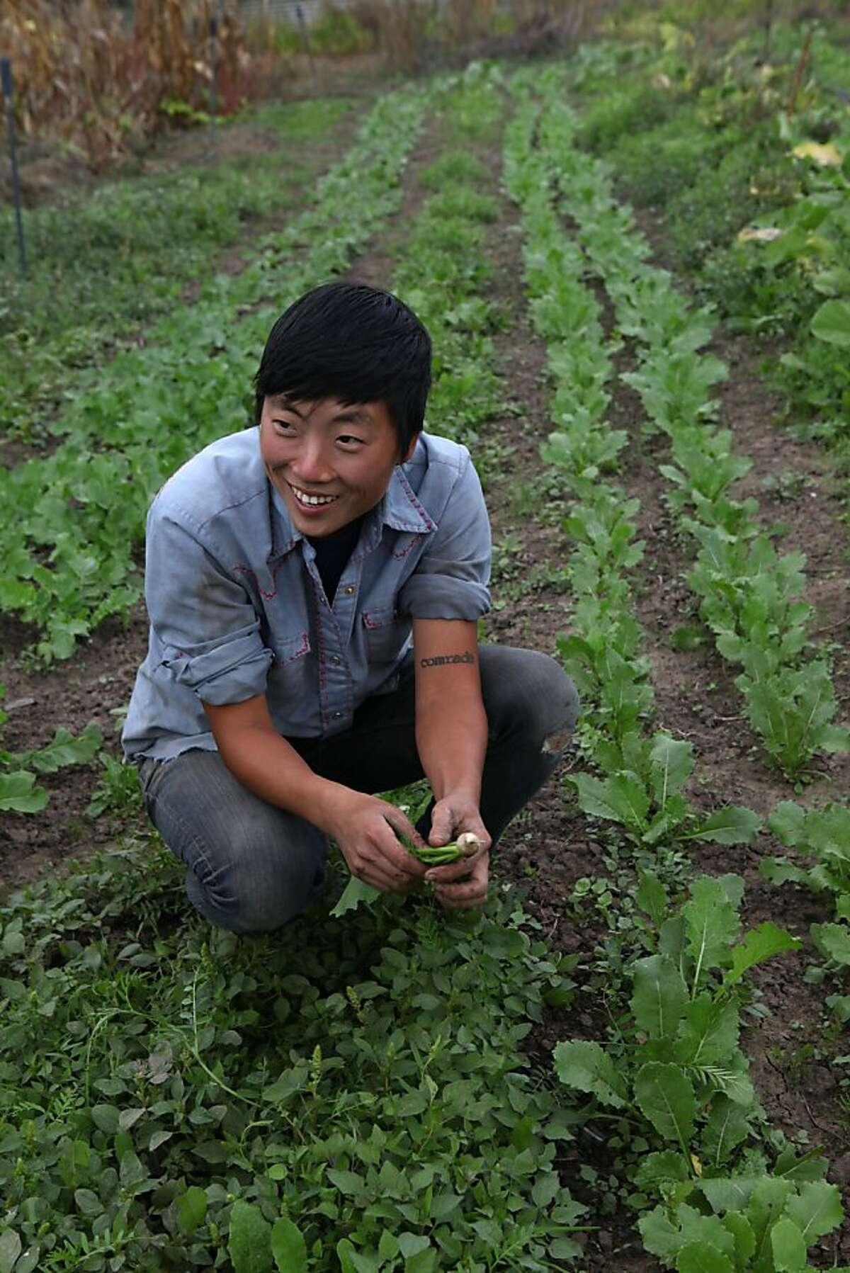 Kristen Leach showing her rows of japanese turnips which she grows at Sunol Agricultural Park in Sunol, Calif., on Wednesday, October 31, 2012. She cultivates heritage crops for korean restaurant Namu Gaji.