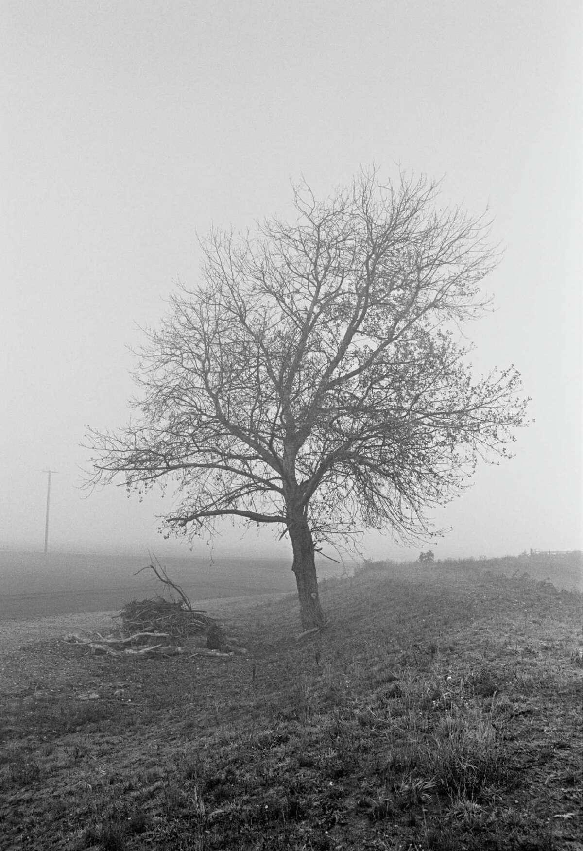 "Trees ""move me aesthetically,"" Charles J. Katz Jr. says."